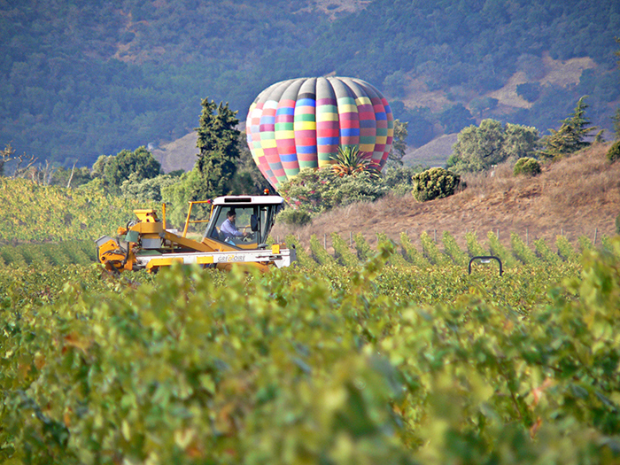 Hot Air Balloon in Napa County