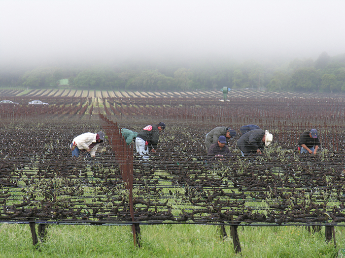 Agricultural workers in  Napa County